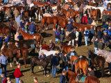 The Masses Gather for the Ballinasloe Horse Fair, Ballinasloe, Ireland Photographic Print by Doug McKinlay