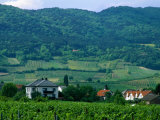 Village of Pfaffstatten Amongst Vineyards with Vienna Woods Behind, Near Baden, Austria Photographic Print by Diana Mayfield