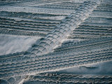 4Wd Tyre Tracks on Sand, Fraser Island, Queensland, Australia Photographic Print by Tony Wheeler