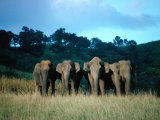 Four Elephants in Periyar Sanctuary of Kerala, Kerala, India Photographic Print by Tony Wheeler