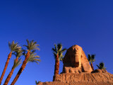 Date Palms along the Avenue of the Sphinxes, Luxor, Egypt Photographic Print by Anders Blomqvist