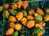 Habanero Chillies at Tepoztlan Market, Tepoztlan, Morelos, Mexico Photographic Print by Greg Elms
