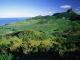 Tea Plantations, Mauritius Photographic Print by John Hay