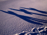 Shadows of Snow-Boarders at a Ski Resort, Gotland, Sweden Photographic Print by Christian Aslund