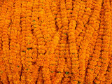 Marigolds for Sale at Flower Market Below Howrah Bridge, Kolkata, India Photographic Print by Richard I'Anson
