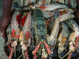 Lobster on Tray About to Be Barbecued, Djibouti, Djibouti Photographic Print by Frances Linzee Gordon