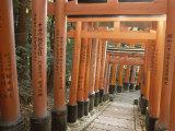 Sacred Torii Path, Fushimi Shrine, Kyoto, Honshu, Japan Photographic Print