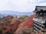 Autumn Leaves, Kiyomizu Temple (Kiyomizu-Dera), Kyoto, Honshu, Japan Photographic Print