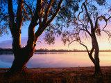 Trees on Edge of Lake Mournpoul, Hattah-Kulkyne National Park, Australia Photographic Print by Paul Sinclair