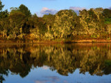 Forest Reflected in a Still Dam, Nyika National Park, Northern, Malawi Photographic Print by Ariadne Van Zandbergen