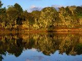 Forest Reflected in a Still Dam, Nyika National Park, Northern, Malawi Photographic Print by Ariadne Van Zandbergen