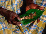 Indigenous Veddah or Wanniyala-Aetto Man Holding Betel Nuts, Colombo, Sri Lanka Photographic Print by Dallas Stribley
