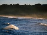 Buchupureo (Tall Wave) Beach, Buchupureo, Biobio, Chile Photographic Print by Paul Kennedy