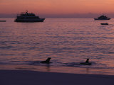 Cruise Ships and Sea Lions, Galapagos Islands Photographic Print by Ernest Manewal
