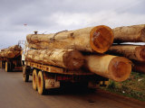 Logging Trucks on Road, Bolaven Plateau, Laos Photographic Print by Woods Wheatcroft