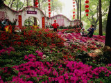 Flowers at Tiger Hill (Hu Qiu), Suzhou, Jiangsu, China Photographic Print by Diana Mayfield