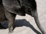 Baby African Elephant Taking a Sand Bath Photographic Print by Chris Johns