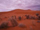 A View of Dried Scrub Grasses in the Red Sand Dunes of Simpson Desert Photographic Print by Medford Taylor