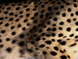 A Close View of an African Cheetahs Spotted Fur Photographic Print by Chris Johns