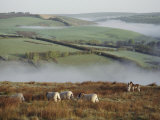 Sheep and Ponies on the Moor Reproduction photographique par Sam Abell