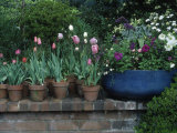 Spring Flowers and Tulips in Pots Fotografisk tryk af Charles Benes