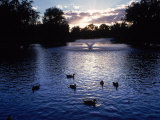 Fountain & Ducks in Water at Sunset Photographic Print by Howard Sokol