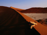Snake on a Sand Dune Photographic Print by Chris Johns