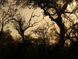 Keith Levit - African Landscape - Kruger National Park - Fotografik Baskı