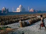 Melon Farm on Yamunas Banks with Taj Mahal in Background, Agra, Uttar Pradesh, India Photographic Print by Anders Blomqvist