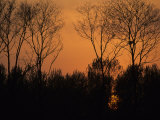 Sunset Through Trees, by Bohai Sea, Qinhuangdao, Hebei Province Photographic Print by Raymond Gehman