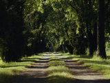 An Unpaved Road Runs Between Two Rows of Trees Photographic Print by Anne Keiser
