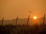 A Solitary Bird Flies by a Fence in the Light of the Low Sun Photographic Print by Medford Taylor