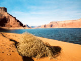Dungeon Canyon, Lake Powell Photographic Print by James Denk