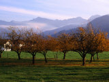 Morning Mist Over Orchards Beneath Bavarian Alps, Germany Photographic Print by Wayne Walton
