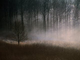 Forest Mist in Rural North West Sjaelland, Sjaelland Island, West Zealand, Denmark Photographic Print by Martin Lladó