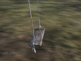A Wooden Swing Waits for a Rider Photographic Print by Roy Gumpel