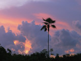 A Palm Tree Silhouetted against a Colorful Cuban Sunset Photographic Print by Steve Winter