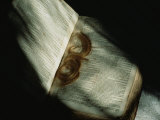 Lock of Hair in a Family Bible Fotografisk tryk af Michael S. Lewis