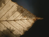 A Close View of a Leaf in Autumn Colors Photographic Print by Roy Gumpel