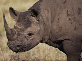 A Close View of a Rhinoceros Photographic Print by Jodi Cobb