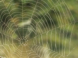 A Close View of the Web of an Orb Weaver Spider Photographic Print by Norbert Rosing