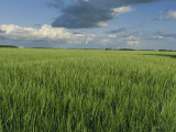 Wide Open Spaces of the Saskatchewan Plains North of Balcarres Photographic Print by Michael S. Lewis