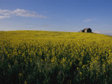 Flax Fields Across the Saskatchewan Plain Photographic Print by Michael S. Lewis