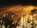 The Filtered Evening Sun on the Surface of Water in the Everglades Photographic Print by Raul Touzon