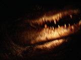 Close-up of a 14-Foot Crocodile Photographic Print by Chris Johns