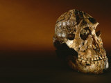Two-Million-Year-Old Hominid Skull of Australopithecus Robustus Lámina fotográfica por Kenneth Garrett