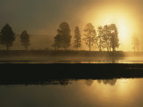 Silhouetted Trees Along the Yellowstone River at Sunrise Photographic Print by Tom Murphy