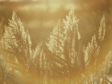 Sun Highlights Wispy Seedheads on Bullrushes Photographic Print by Stephen St. John