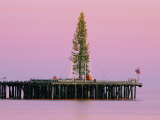 Sunset Framing a Christmas Tree on Stearns Wharf Photographic Print by Rich Reid