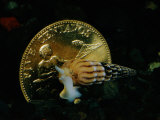 Philippine Gold Coin with Turret Shell Photographic Print by Paul Zahl